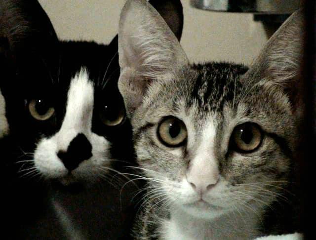 Frankie and Ernie Babies